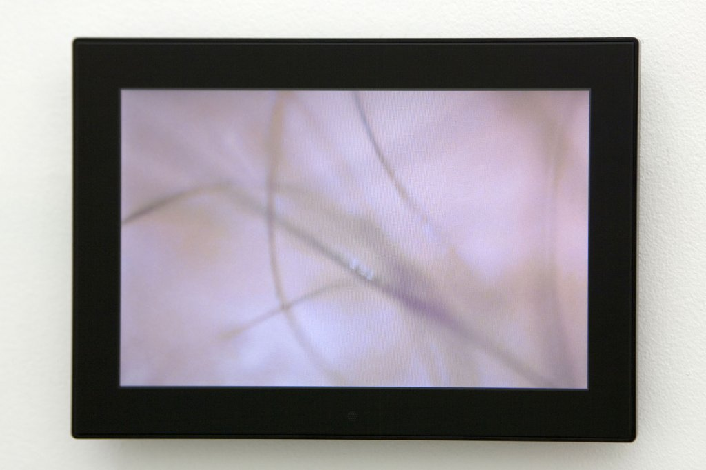 "<p>John Tonkin <em>my own worst enemy </em>2010 digital video, 10"" digital photo frame, digital file & DVD 8:00 minutes</p>"
