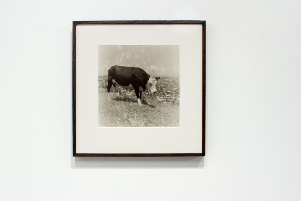 <div>Jane Brown, <em>Mt Eden, Auckland</em>, 2012/13, fibre-based, gelatin silver print, 45 x 44 cm framed, 27 x 27 cm image, Edition of 7</div>
